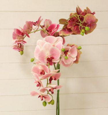 img_1890-orchidea-phalaenopsis-due-steli-fileminimizer