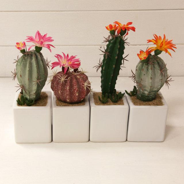 piante grasse artificiali con vasetto bianco vivaio