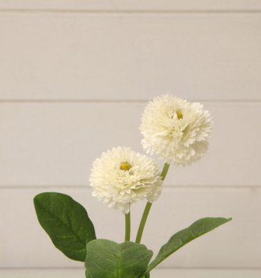 Bellis Bianco vivaio arreda online shop