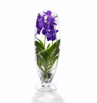 orchidea vanda con vaso in vetro