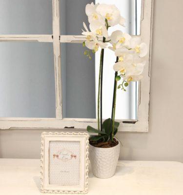 Composizione di Phalaenopsis Bianchi