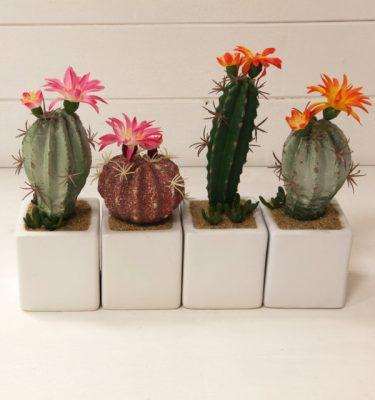 img_2106-piante-grasse-con-vasetto-bianco-fileminimizer