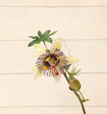 img_2215-fiore-passiflora-fileminimizer