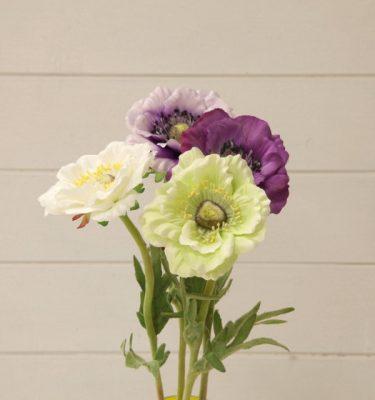 anemone eden - vivaio arreda online shop