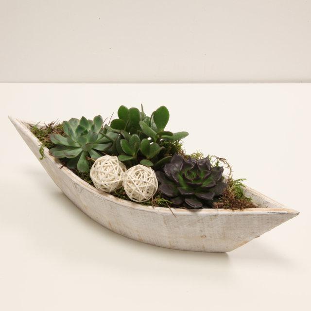 Composizione con piante grasse piccola vivaio arreda for Composizione di piante grasse in grande vaso