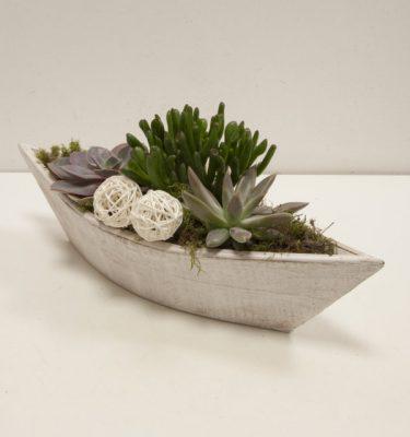 Composizione con piante grasse piccola - Vivaio Arreda Online Shop