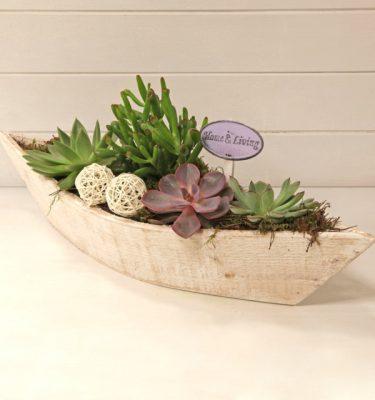 Composizione con piante grasse - Vivaio Arreda Online Shop