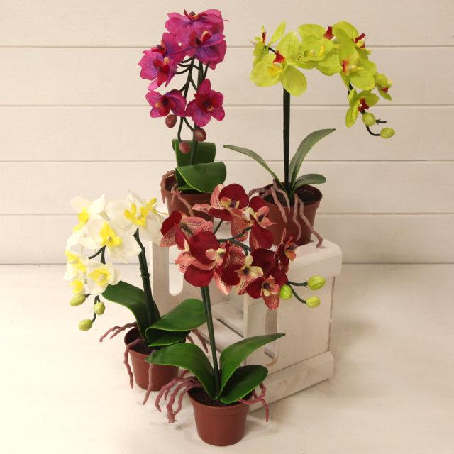 Orchidea phalaenopsis in vaso vivaio arreda online shop for Vaso orchidea
