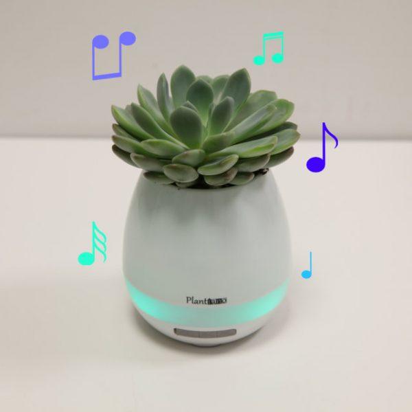 Vaso Musica - Vivaio Arreda Online Shop