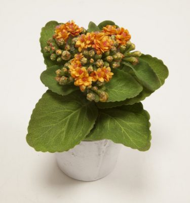 Kalanchoe Artificiale in vaso - Vivaio Arreda Online Shop