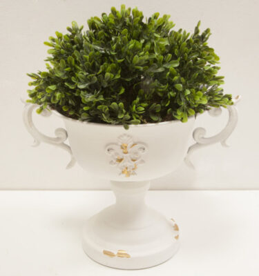 Vaso Coppa Elegance Medium con pianta